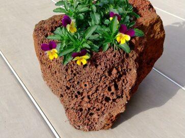 火山岩の植木鉢