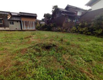 敷地内の雑草がとてもよく生えています